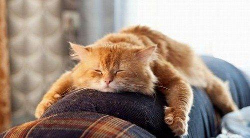 рыжий кот дома
